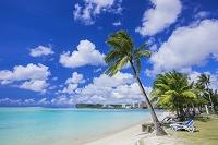 グアム ヤシの木と海