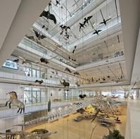 イタリア 科学博物館MUSE