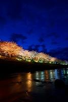 静岡県 河津桜まつり