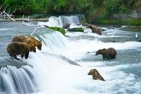 ヒグマとカトマイ国立公園