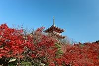 京都市 洛東 清水寺