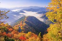 滋賀県 紅葉のおにゅう峠より雲海の山並み 朝景