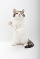 立ち上がっている子猫