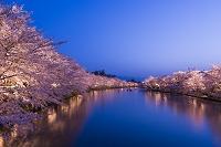 青森県 桜咲く弘前公園 西濠のライトアップ