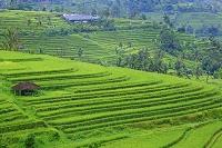 インドネシア バリ島 ジャティルウィ ライステラス