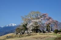 長野県 田端のシダレザクラとコブシと甲斐駒ヶ岳