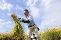 稲の収穫をする農夫