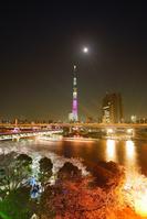東京都 台東区 隅田公園の夜桜とスカイツリーと月