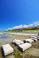 京都府  鴨川