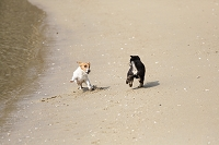 砂浜で遊ぶ犬