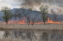 滋賀県 西の湖 ヨシ焼き