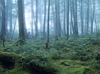 長野県 白駒の森