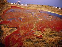 サロマ湖のサンゴ草、キムアネップ崎、夕景、