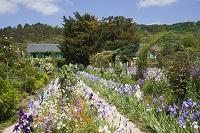 フランス ジヴェルニー モネの庭