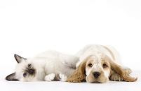 横たわる猫と犬