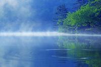 京都府 宝ヶ池と森 朝景