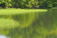 新緑と湖水