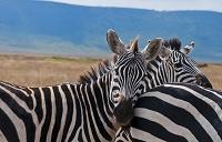 アフリカ タンザニア