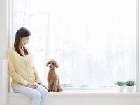 窓辺に座る日本人女性とトイプードル 犬