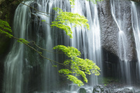 新緑の達沢不動滝