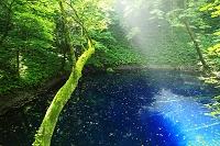 青森県 白神山地 十二湖の青池