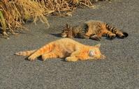 二匹で寝る猫