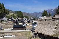 富山県 サクラ咲く五箇山相倉合掌造り集落