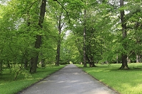 チェコ チェスキークルムロフ 木立と小道