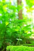 神奈川県 双葉の新芽