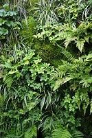 シダ類植物