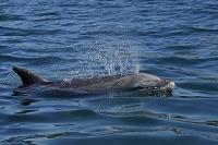 ハンドウイルカの呼吸