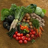 土の上の新鮮野菜
