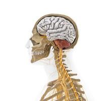 人体のイメージ イラスト