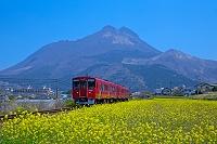 大分県 菜の花と由布岳と200DC(キハ200)
