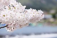 京都市 嵐山