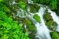 山梨県 南アルプスの森の天然水