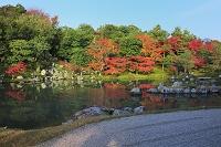 京都府 天龍寺 朝日を受ける曹源池の紅葉
