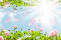 青空と舞い散るバラ