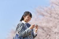 桜とスマホを見る女子中学生