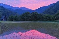 岐阜県 水田の夕景
