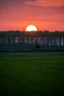 北海道 林に沈む太陽