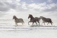 浅い海の上を走る馬