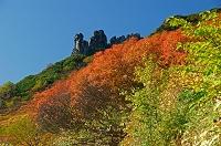 北海道 黒岳九合目付近の紅葉
