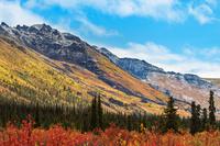 カナダ 極北の秋