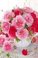 3種類のピンク色のバラ