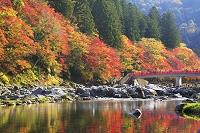 愛知県 香嵐渓の紅葉