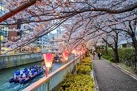 東京都 目黒川