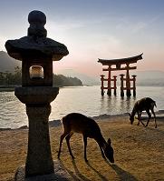 広島県 宮島 大鳥居の夕景