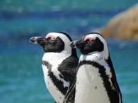 2羽のペンギン