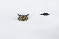 ドイツ 雪に埋もれる猫